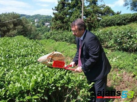 Çay İşletmeleri Genel Müdürlüğü 200 Personel Alımı Yapacak