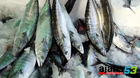 Balıkçılara palamut uyarısı